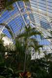 Tropical Trees in Conservatory. The weather and conditions are always perfect inside the conservatory (greenhouse/hot house). Tropical trees grow tall while it Royalty Free Stock Photography