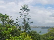 Tropical trees in the foreground, blurred background view over the bay in front of Sydney. To the blurred skyline of the city Stock Photos