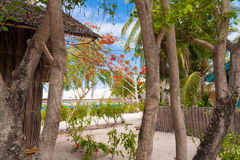 Tropical trees on the island Stock Photo