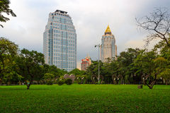 Tropical trees and lawn with skyscrapers in the. A park view of lawn with heart-shaped bushes and skyscrapers in the background in Lumphini Park, Bangkok Royalty Free Stock Images