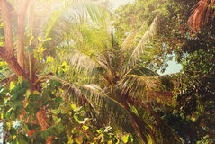 Tropical Trees Leaves Asian Forest Background Royalty Free Stock Photos