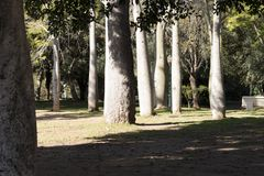 Tropical trees in municipal park La Eliana stock photo