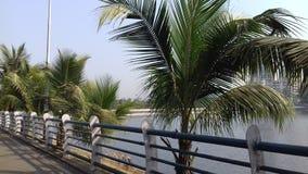 Tropical trees near lake Royalty Free Stock Photo