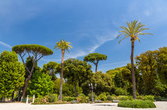 Tropical trees on Piazzale Napoleone I in Rome, Italy Stock Images