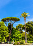 Tropical trees on Piazzale Napoleone I in Rome Royalty Free Stock Images