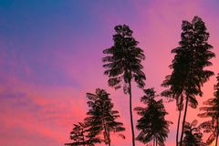 Tropical trees in Tucson Arizona at sunset stock images