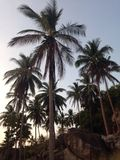 Tropical twilight sun highlights palm. Tropical suset on palm trees royalty free stock image