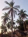 Tropical twilight sun highlights palm. Tropical suset on palm trees Stock Photography