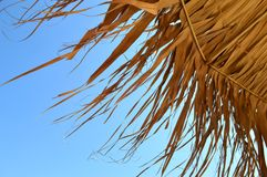 Tropical umbrella details Stock Photo