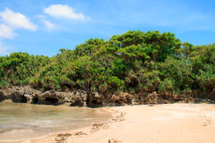 Tropical undergrowth on the coastal rock Royalty Free Stock Photos