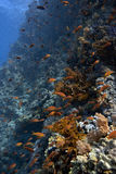 Tropical underwater landscape Stock Images