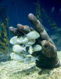 Tropical underwater life in a aquarium Stock Image