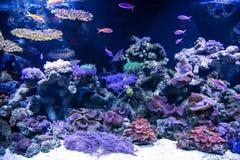 Tropical underwater life in a aquarium Stock Photo