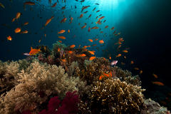 Tropical underwater life in the Red Sea. Stock Photo