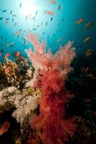 Tropical underwater life in the Red Sea. Royalty Free Stock Photo
