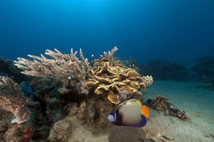 Tropical underwater life in the Red Sea. Stock Images