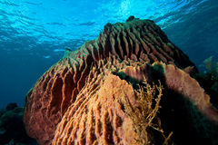 Tropical underwater mountains. Underwater paradise in Indonesia Stock Images