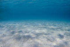 Tropical underwater paridise Royalty Free Stock Images