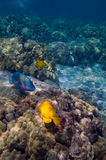 Tropical underwater scene Royalty Free Stock Images