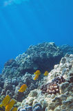 Tropical Underwater scene Stock Image