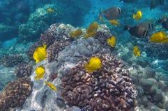 Tropical Underwater scene Stock Photography