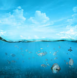 Tropical underwater scene Stock Image