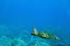 Tropical underwater scene - sea turtle Royalty Free Stock Photo