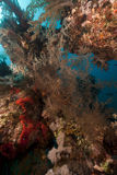 Tropical underwater scenery in the Red Sea. Stock Images