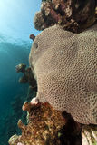 Tropical underwater scenery in the Red Sea. Royalty Free Stock Photography