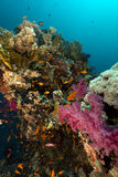 Tropical underwater scenery in the Red Sea. Stock Photography