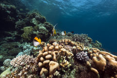 Tropical underwater scenery in the Red Sea. Stock Photos