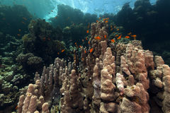 Tropical underwater scenery in the Red Sea. Stock Image