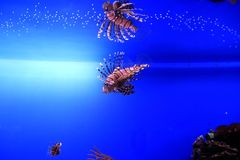 Tropical underwater world Royalty Free Stock Images