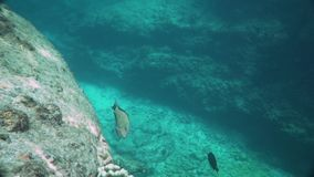 Tropical underwater world. Underwater view on the coral reef and tropical underwater world. Diving and snorkeling in the tropical sea.Travel concept,Adventure stock video footage