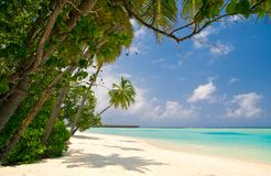 Tropical unspoilt beach. With coconut palm trees and white sands Stock Image