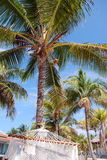 Tropical vacation. Hammock hung between palm trees Stock Photo