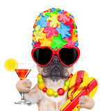 Tropical vacation dog Royalty Free Stock Photo