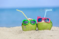 Tropical vacation travel concept, Two fresh young coconut lying Royalty Free Stock Image