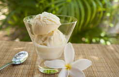 Tropical Vanilla Ice Cream Stock Photos