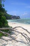 Tropical vea con el árbol muerto, Seychelles Imagenes de archivo