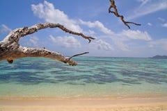 Tropical vea con los corales y el árbol muerto Foto de archivo libre de regalías