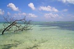 Tropical vea con los corales y el árbol muerto, La Digue, Imagen de archivo