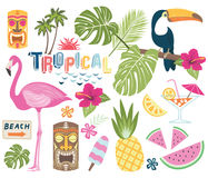 Tropical Vector Collection Royalty Free Stock Image