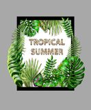Tropical vector design for banner or print for t-shirt with  palm, fern, monstera leaves. Tropical vector design for banner  with  palm, fern, monstera leaves Royalty Free Stock Photos