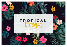Tropical vector design with bright hibiscus flowers and exotic palm leaves on dark background. Royalty Free Stock Photo