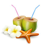 Tropical vector elements for design. On a white background (starfish, coconut drink, flowers Royalty Free Stock Photos