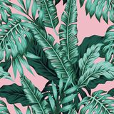 Tropical leaves green seamless pink background Stock Images