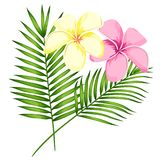 Tropical vector pink plumeria flowers, branches and leaves set for floral card illustration. Flower Bouquet with exotic Leaf. Isolated on white background vector illustration