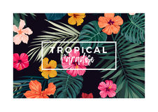 Tropical vector postcard design with bright hibiscus flowers and exotic palm leaves on dark background. Stock Photo