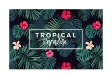 Tropical vector postcard design with bright hibiscus flowers and exotic palm leaves on dark background. Stock Images